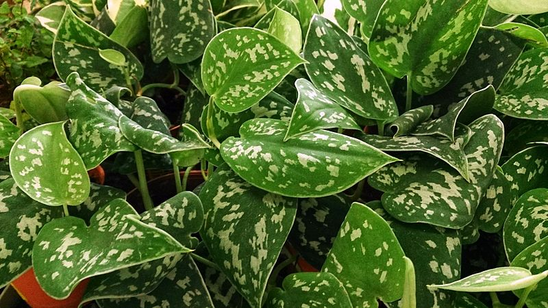 Why is my houseplant dying askjudy houseplant 411 how to identify and - Leafy houseplants ...