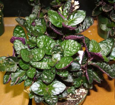 heres a brighter picture of what waffle house plants in containers look like does this picture resemble your houseplants
