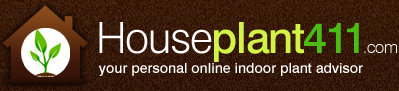 Houseplant Identification, Care Guide, and answers to