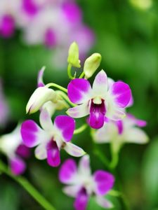 how to care for orchids when blooms fall off