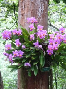 Mauve orchid plant on a tree